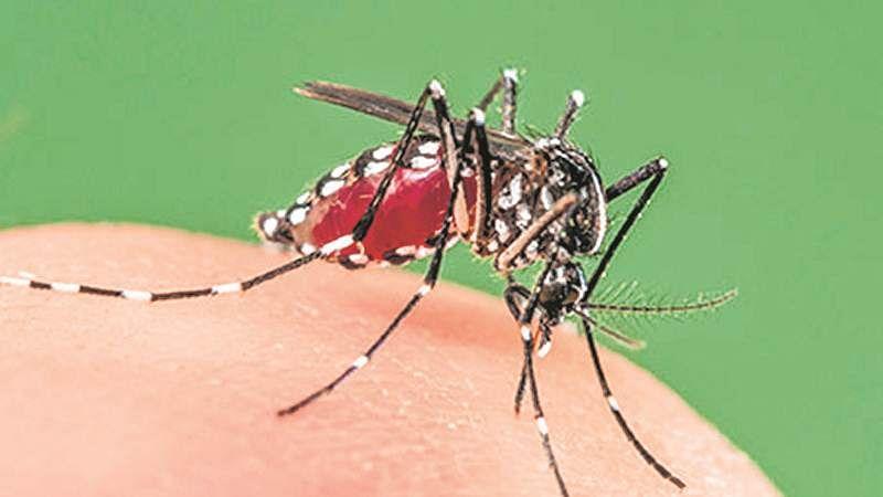 HimachalPradesh: 100 cases of dengue reported in Kangra district