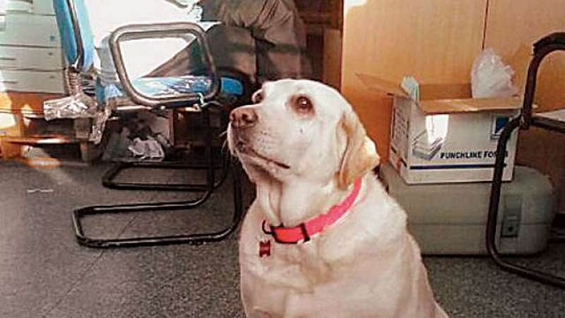 Mumbai: 37 canines patrol stations on Central line