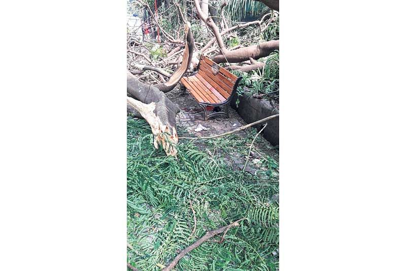 Mumbai's civic body doesn't have any mechanism to stop tree fall incidents