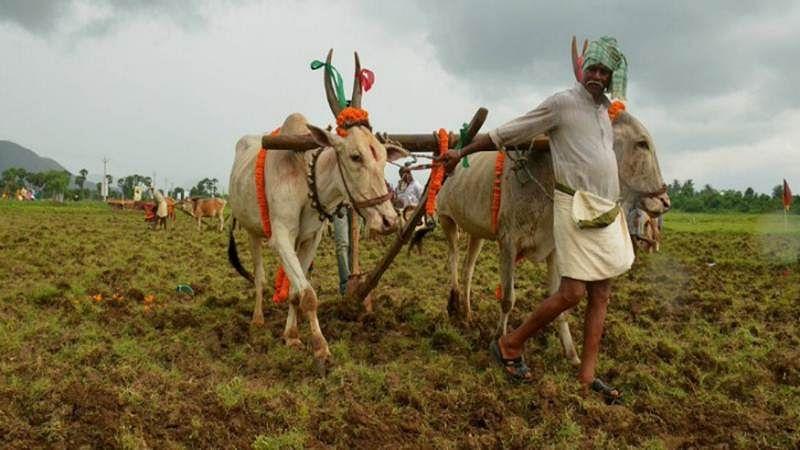 Maharashtra: Central team on visit to assess crop damage from Nov 22