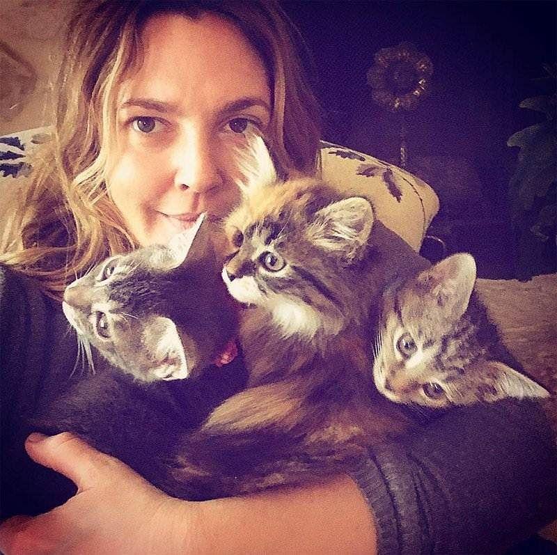 Drew Barrymore adopts three kittens