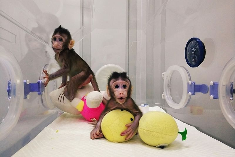 First monkeys cloned by process that made Dolly the sheep