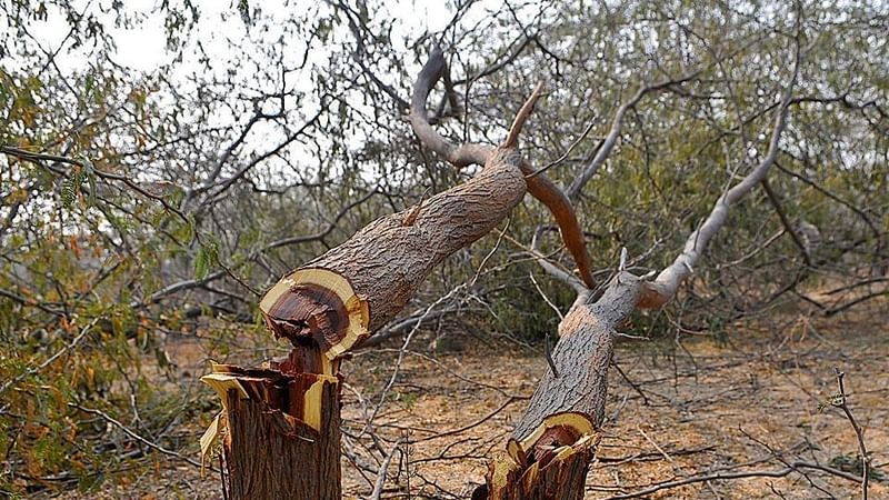 Mumbai: BMC on merciless tree-cutting spree, says Corporators
