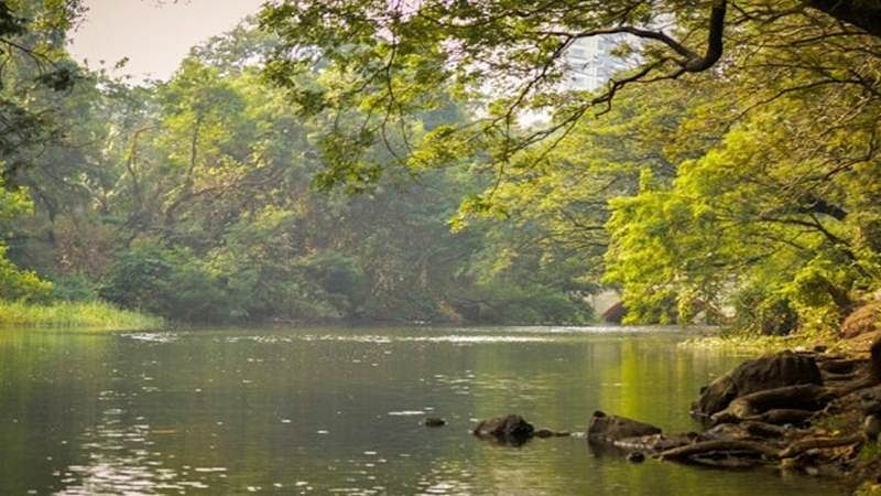 Mumbai: SGNP to have artificial pond for visarjan