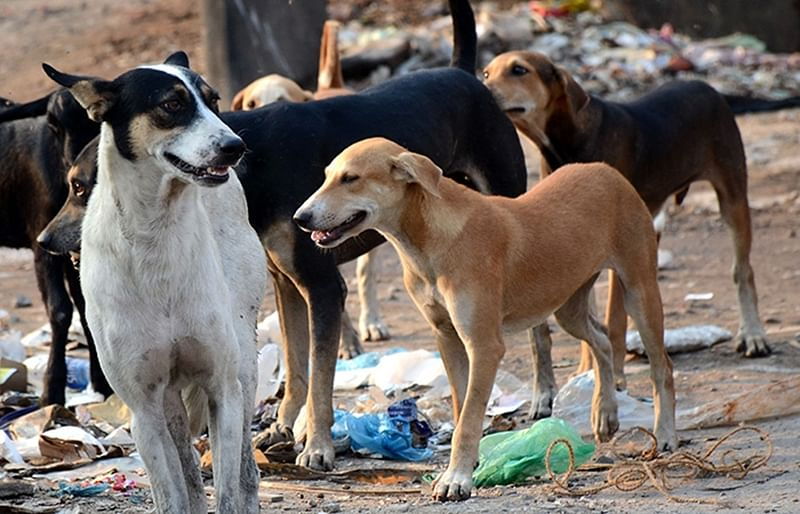 Stray dog bites seven children; stoned to death in Ulhasnagar