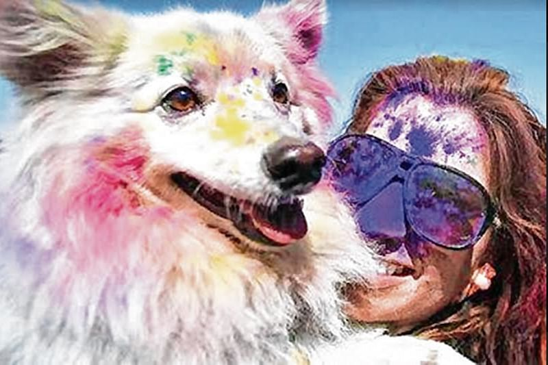 Thane: Expert advises to play holi with animals carefully