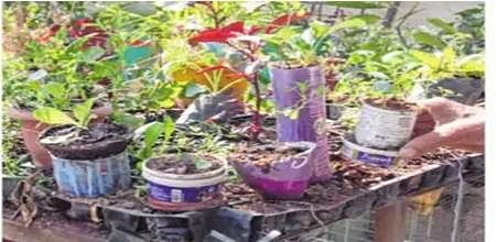 Indore: Plants too have valentines but no dedicated day for them