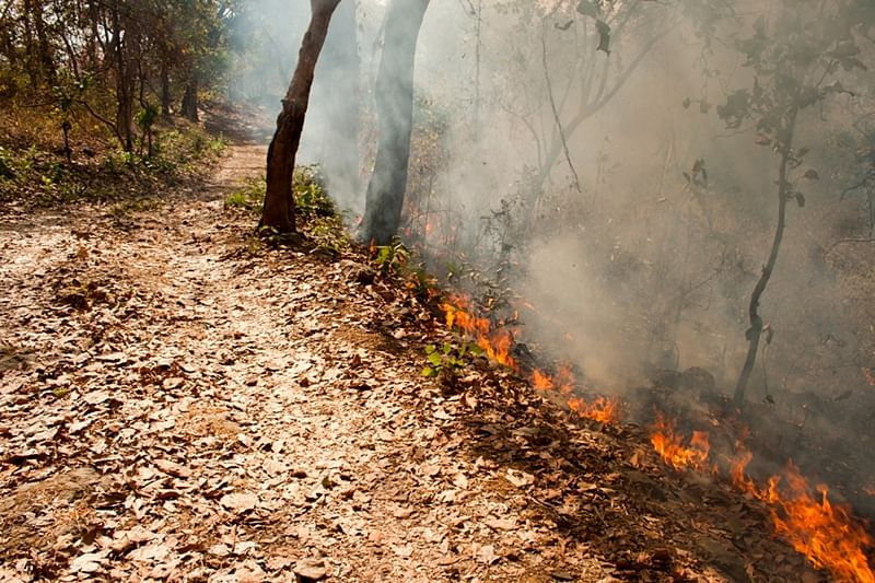 Maharashtra reports 1,500 forest fire cases in five weeks, most of them were man-made