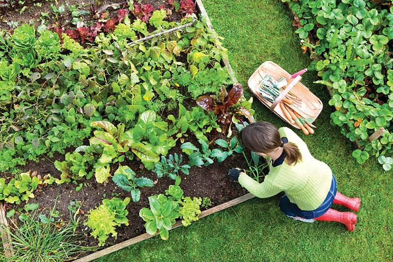 A dummy's guide to summer gardening