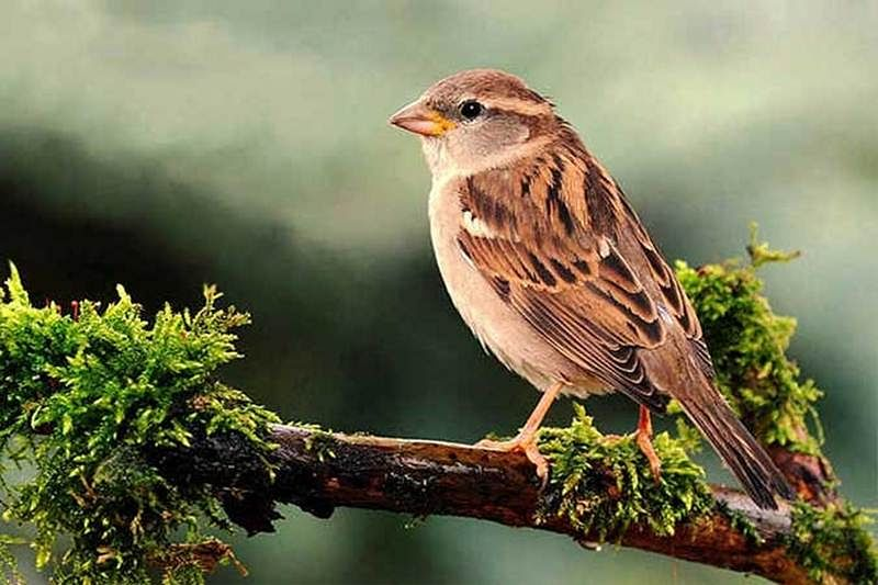 World Sparrow Day: This is why sparrow population is going down in Mumbai