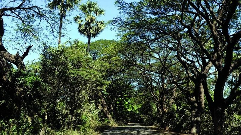 Mumbai: 112 officials not qualified enough to take care of over 25 lakh trees, fear tree activists