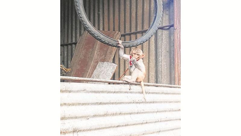 CISF jawans learning to use 'gulels' to tackle monkey menace at Taj Mahal