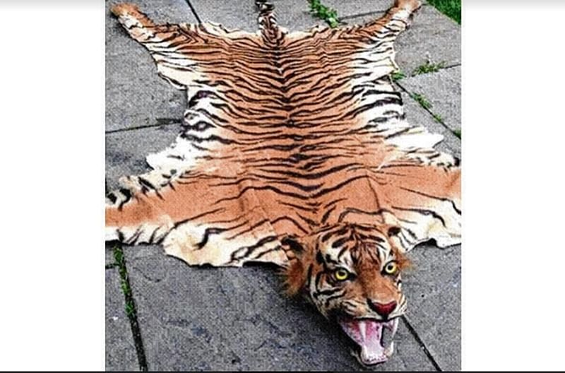 Mumbai: Father-son arrested for trying to sell tiger skin