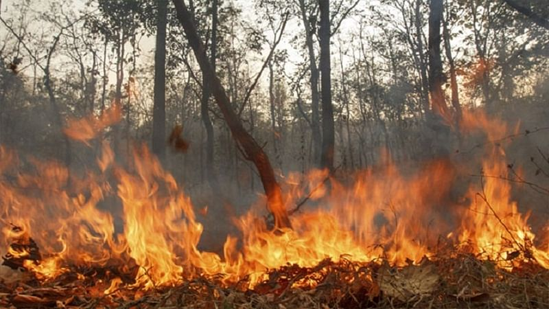 Shiv Sena afire over burnt trees