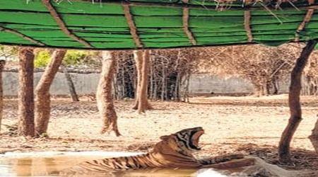 Bhopal: Khus curtains, sprinklers to keep Van Vihar animals cool