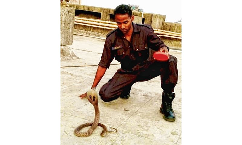 Mumbai: Trained commando doesn't just catch crooks, but snakes too
