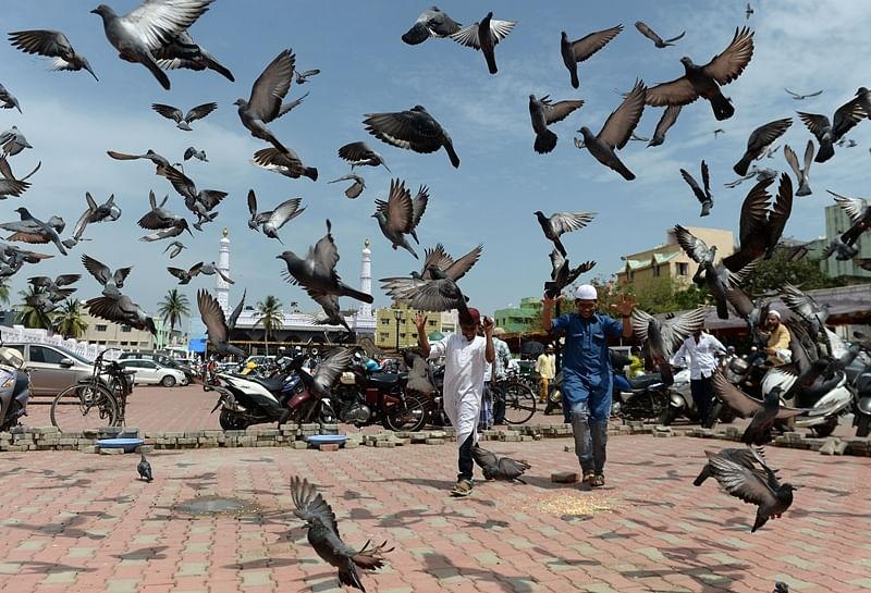 Young Indian Muslims walk past pigeons after Eid al-Fitr prayers at Wallajah Mosque in Chennai on June 16, 2018./ AFP PHOTO / Arun SANKAR