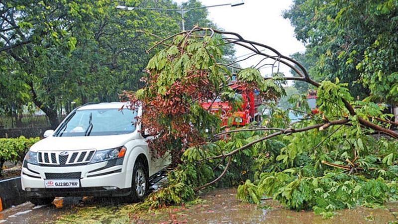 Mumbai tree falls: BMC mulls setting up panel to get to root of matter