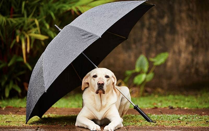 Expert tips to take care of your pets during monsoon