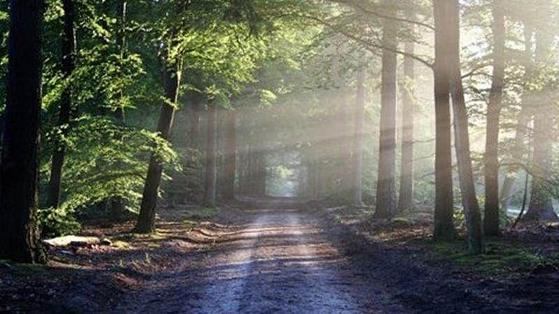 Mumbai: MMRC promises to plant 20,900 trees in SGNP