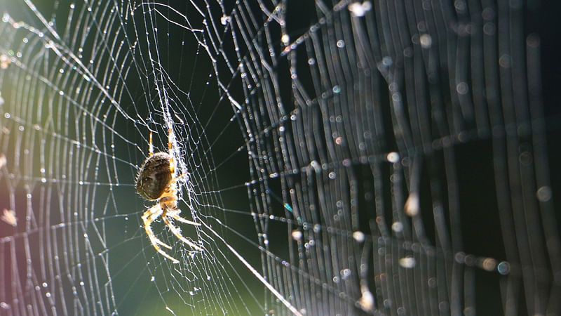 Spider silk vaccine may help prevent cancer