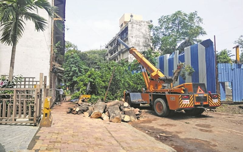 BMC to Bombay High Court:Allowed trimming of trees only after considering public's 'safety'
