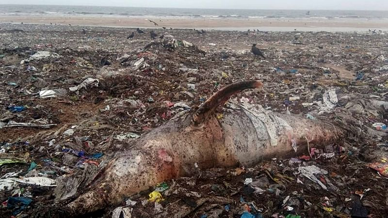 Second dolphin carcass washes ashore in Mumbai in 4 days