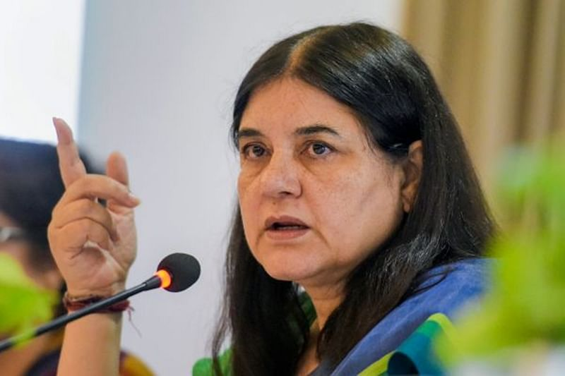 Tigress Avni killing: Maneka Gandhi writes letter to Devendra Fadnavis, asks him to remove Sudhir Mugantiwar as forest minister
