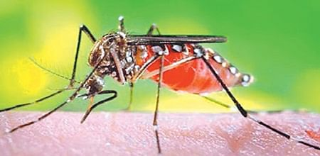 Indore: Dengue on rise, three more test positive