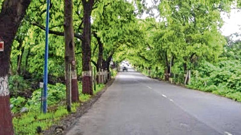 Environmentalists to tie rakhi to trees at Aarey Milk Colony