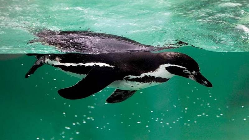 Let's talk about gay penguins: Munich zoo joins Pride week