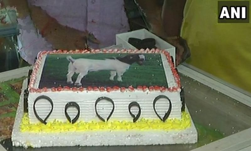 News Alert: People in Lucknow to celebrate eco-friendly Bakra-id by cutting cakes with a goat image