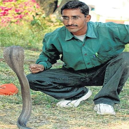 Nagpanchami Special: Mukesh Ingle, who rejoices in the 'company' of poisonous snakes!