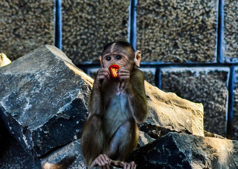 World Photography Day 2018: How to ace the photography game with your phone