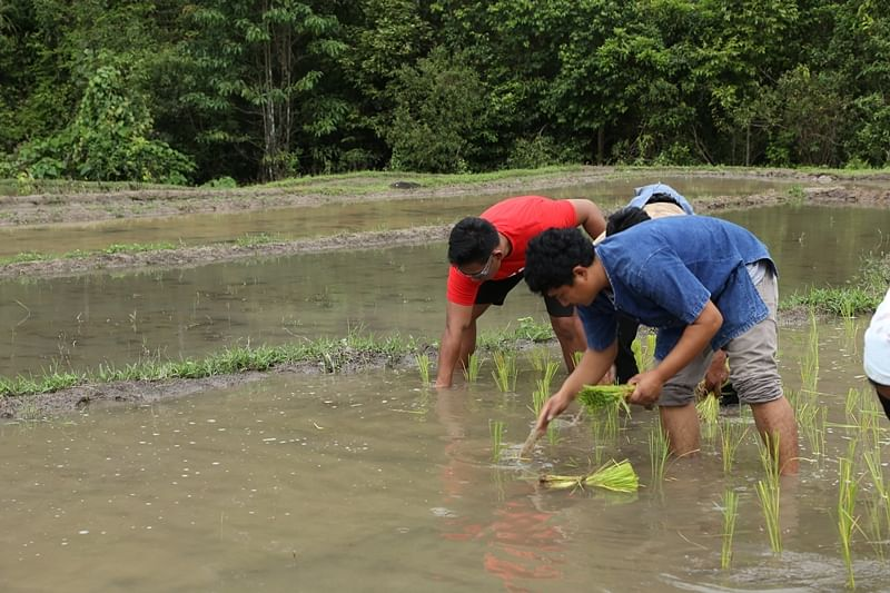 Rice planting with the hill tribes