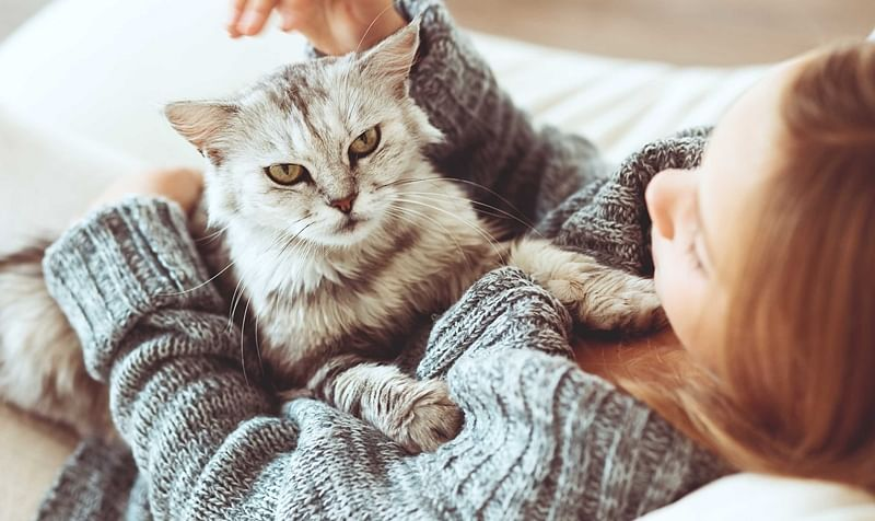 International Cats Day 2018: Owing these furry felines has enormous health benefits
