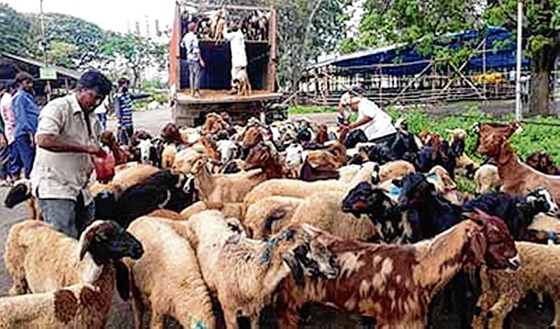 Uttarakhand High Court bans goat slaughter in open during Bakr-Eid