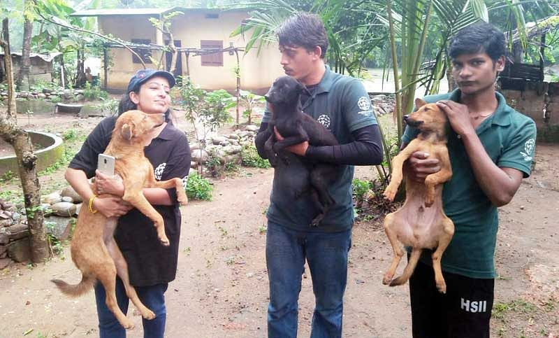 Finding & rescuing flood-hit fauna