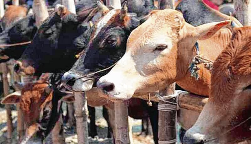 Soon, cow urine & dung based soaps, face packs to be sold on Amazon