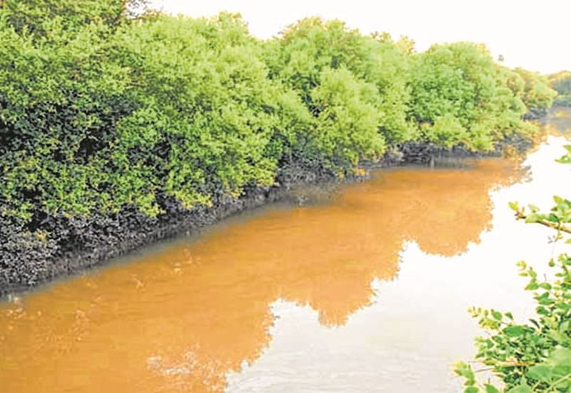 Mangrove Judgement: Welcome move, but expected more, say environmentalists
