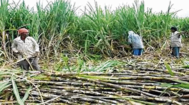 UP govt asks sugar mills to clear dues of farmers by Oct 31