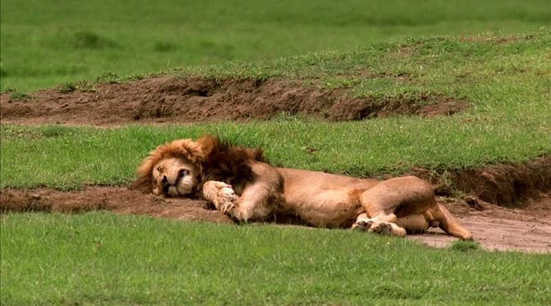 Gujarat: 11 Asiatic lions dead in Gir