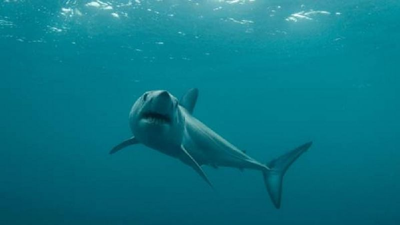 Shark hotspots under threat, world over