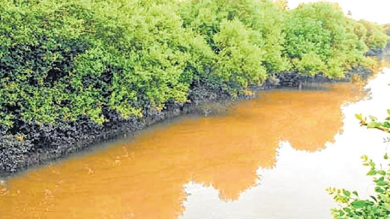 Maharashtra sets up single empowered panel on mangroves