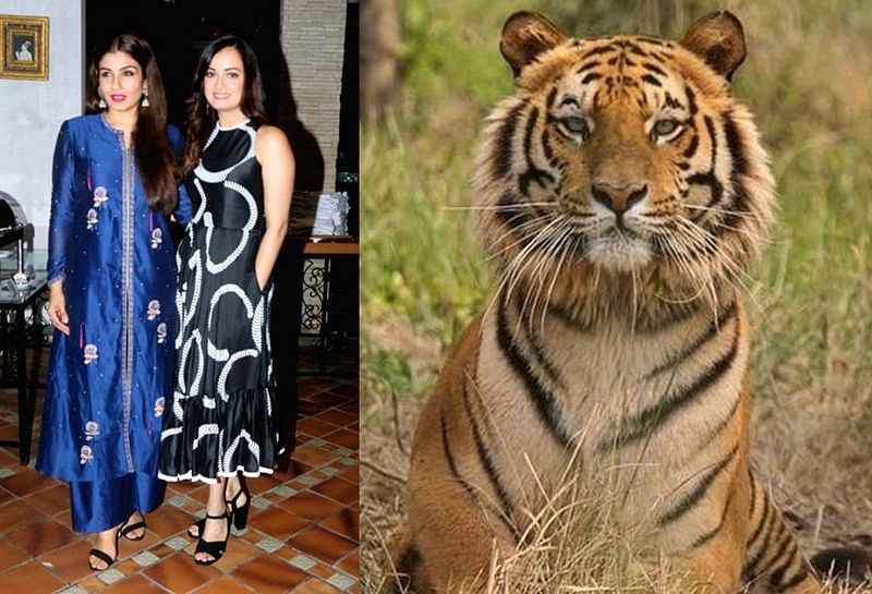 National Shame! Raveena Tandon, Dia Mirza, Kubbra Sait and others react over the killing of tigress Avni