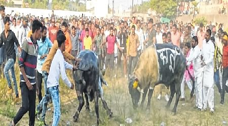 Gory Tradition: Despite ban bullfighting continues unabated