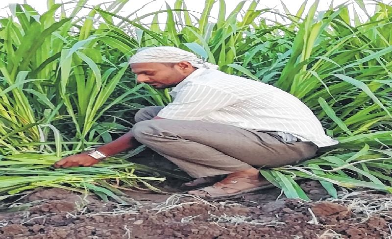 Maharashtra: My mission is to serve the nation, says Pandurang Tanaji More