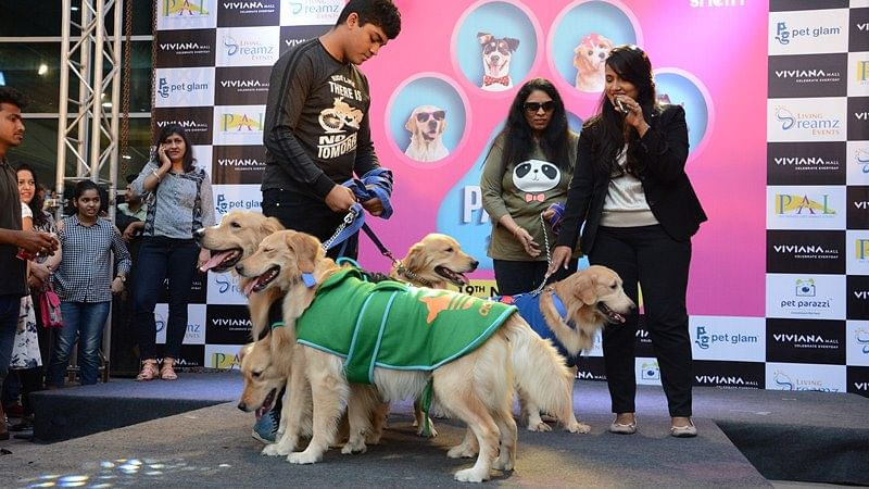 Enjoy a pawfect weekend at the second edition of Pawsome Show
