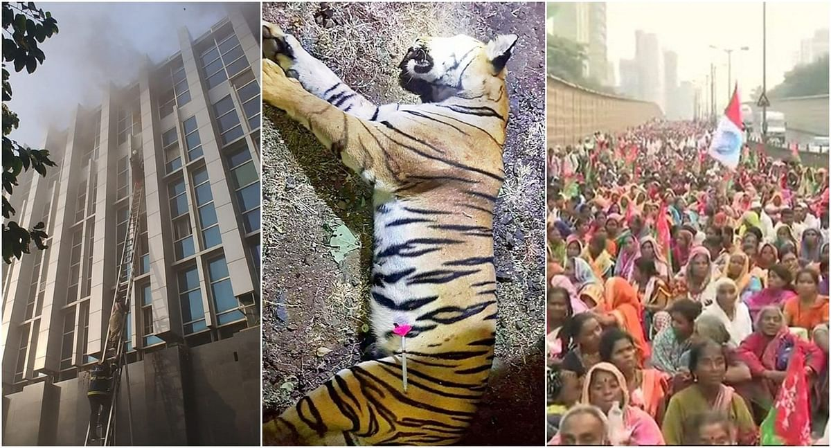 Flashback 2018: Tigress Avni, plastic ban, fires hogged limelight in Maharashtra