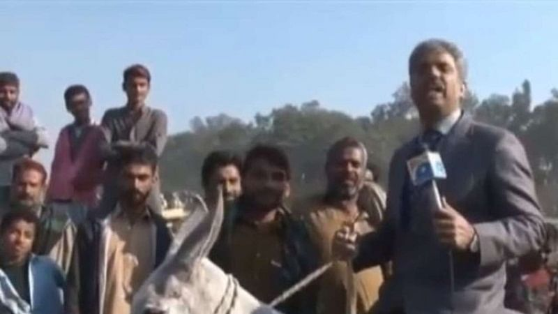 Duh! Pakistani reporter rides donkey while reporting, becomes a viral sensation